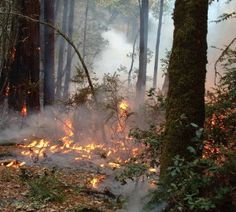 The Soberanes Fire has burned over 60,000 acres in Monterey County & is about 45% contained. http://www.savetheredwoods.org/blog/futures/soberanes-fire-burns-redwood-region/#utm_sguid=116638,870b36b3-30ff-312b-3816-419f878f2472 Read & share #SamHodder's #GiantThoughts post to learn more.