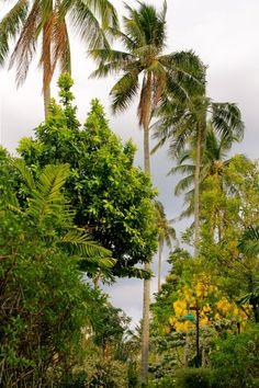 and THEN the rain came! Im Garten des Islanda Eco Village Resorts, Koh Klang, Krabi, Thailand Krabi Thailand, Island, Resorts, Plants, Gardening, Travel, Nice Asses, Block Island, Islands