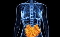 Neuroscientists are probing the idea that intestinal microbiota might influence brain development and behavior