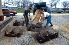 Between 1994 and 1997, Bob Bluett and his team at the Department of Natural Resources relocated 346 river otters to Illinois. (Courtesy Bob Bluett)