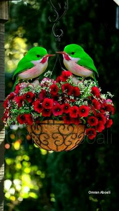 & Green Flowers w/ Red & Green Decorative Birds Birds And The Bees, All Birds, Cute Birds, Pretty Birds, Little Birds, Beautiful Birds, Animals Beautiful, Cute Animals, Bird Pictures