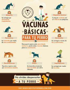 Hi Beagle Inmobiliaria apoyamos los espacios Perfriendly y te sugerimos como cuidar a tu mascota. http://hibeagle.com/