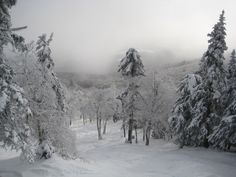 Okemo's double-black diamond glade, Outrage, is filled with snow after the storms of the past few days!