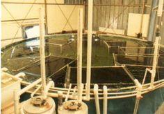 Aquaculture of Texas - Tank Production of Freshwater Prawn Aquaponics Supplies, Aquaponics Plants, Aquaponics System, Hydroponics, Aquaculture Tanks, Edging Plants, Aqua Culture, Home Aquarium, Fish Farming