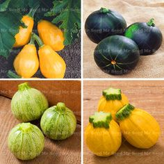 20pcs Rare Squash seeds,Round Zucchini seeds,Organic Heirloom bonsai Vegetable potted plant for home garden. Yesterday's price: US $0.89 (0.73 EUR). Today's price: US $0.38 (0.31 EUR). Discount: 57%.