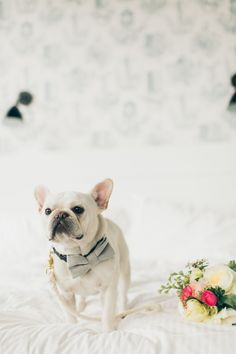 Oh look at this fancy little french bulldog in his bowtie ready to help with all things wedding! xx