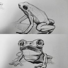 개굴개굴 개구리 frog sketches by sangjoon park #doodle #doodles #art #illust…