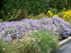 11 Best Mountain States Garden Collection Images Garden