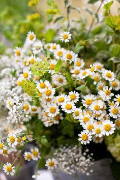 Flowers by Sean Walker Photography Little Flowers, Wild Flowers, Daisy Flowers, Yellow Daisies, Pretty Flowers, Daisy Love, Wonderful Flowers, Felder, Zinnias