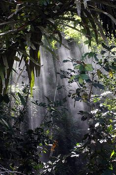 This Jungle Setting gives off a very mystical vibe, I chose this picture because this is what I think depicts the background and theme very well throughout my interpretation.