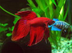 pesci - Cerca con Google