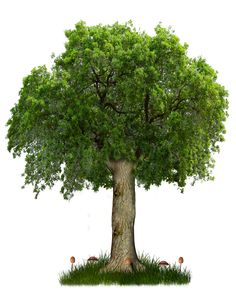 Tree - Google Search - 17/11/2015