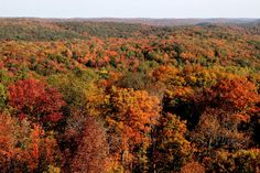 Fall colours viewed from the Dorset Fire Tower.