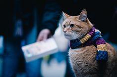 寒い。 (via Crusade.)  Source: Flickr / i-loved-yesterday