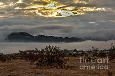 Fog On The Sonaran Desert: See more images at http://robert-bales.artistwebsites.com/