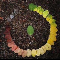 Life Cycle of a Leaf  A LITTLE LIKE THE CIRCLE OF LIFE WE COME, WE DO, WE GO: