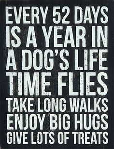 EVERY 52 DAYS IS A YEAR IN A DOGS LIFE TIME FLIES TAKE ALONG WALKS ENJOY BIG HUGS GIVE LOTS OF TREATS  -photo credit to the owner #dogs #cats