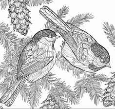 Bird Coloring Pages, Adult Coloring Pages, Coloring Books, Great Backyard Bird Count, Backyard Birds, Merlin Bird Id, Types Of Colours, Great Horned Owl, All Birds