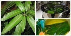 CURE DIABETES | BOIL These LEAVES And Cure Diabetes NATURALLY Without Using Drugs!