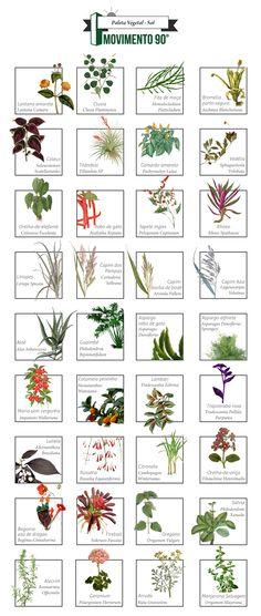 Paleta Vegetal — Movimento 90º