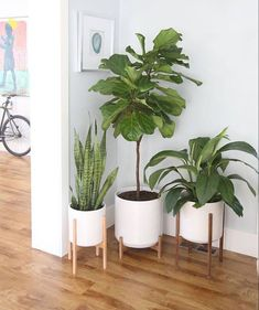 Large Mid Century Modern Planter Wood Plant Stand Modern Plant Pot and Planter . Large Mid Century Modern Planter Wood Plant Stand Modern Plant Pot and Planter Stand 12 Ceramic Pot Modern Planters, Indoor Planters, Wood Planters, White Planters, Planter Pots, Wood Plant Stand, Modern Plant Stand, Ceramic Plant Pots, Home And Deco