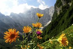 Triglav National Park - Destination City Guides By In Your Pocket Alpine Adventure, Tourist Center, Julian Alps, Central Europe, Nature Reserve, Outdoor Recreation, Eastern Europe, Slovenia, Beautiful World