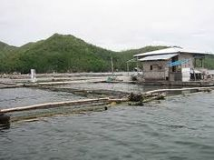 Image result for aquaculture