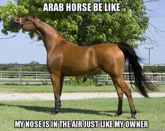 Insulting yet funny, since I'm an Arab owner....but very accurate for some haha!