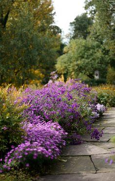 Die 202 Besten Bilder Von Pflegeleichter Garten Small Gardens
