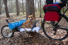 dog in bob bike trailer - Google Search