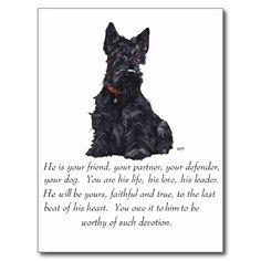 Scottish Terrier Keepsake - MALE Dog Postcard   Zazzle