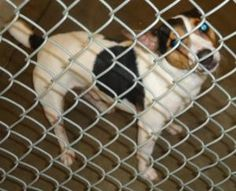 13-0338 is an adoptable Terrier Dog in Emporia, KS. Found in the 600 block of Exchange....