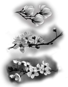 Asian Flowers, Japanese Flowers, Floral Tattoo Design, Flower Tattoo Designs, Rose Tattoos, Flower Tattoos, Realistic Flower Drawing, Cherry Blossom Drawing, Samourai Tattoo