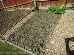 Growing Vegetables – The Good Life in Waterlooville Spring 2015