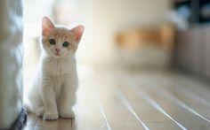 Yavru kedi bakımı temizliği ve beslenme şekilleri.
