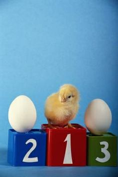 Activities for Kids on Egg-Laying Animals