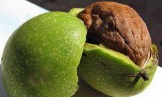 Se spune ca nucile verzi sunt simbolul vietii si al fecunditatii, iar coaja verde are proprietati astringente, datorita continutului mare de tanin si iod. Healing Herbs, Honeydew, Good To Know, Avocado, Flora, Mango, Food And Drink, Tasty, Apple