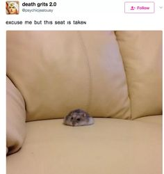Hamster that is taking up a whole seat in a Tweet on Twitter.