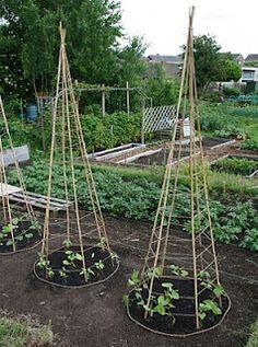 great idea for the garden - cucumber teepee