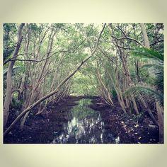 #ジャングル#jungle#philippines#フィリピン