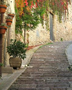 Red Ivy and Steps in Assisi, province of Perugia , Umbria region Italy