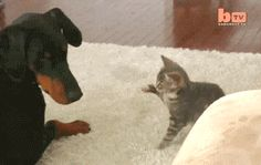 Attacking Dog | Funny Cat GIFs