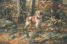 Stone Wall Brittany Dog  by Robert K. Abbett