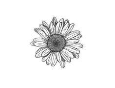 Delicate hand drawn flower