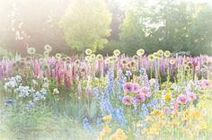 Photographie de fleur - photographie de Nature magique, rêveuse, romantique, jardin d