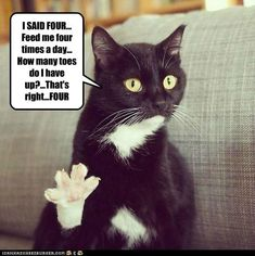 Funny-cat-I-said-four.jpg (500×502)