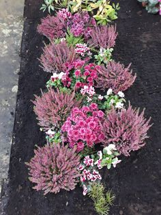 Grabbepflanzung Herbst Best Picture For garden decoration school For Your Taste You are looking for something, and it is going to tell you exactly what you are looking for, and you … Grave Decorations, Outdoor Christmas Decorations, Front Garden Entrance, Window Box Flowers, Cemetery Flowers, Fall Arrangements, Fall Flowers, Pink Flowers, Flower Beds