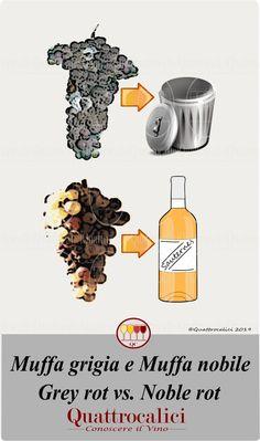 Wine Education, Wine And Beer, Wine Tasting, Dog Food Recipes, Drinks, Dessert Wine, Desserts, Wine, Drinking