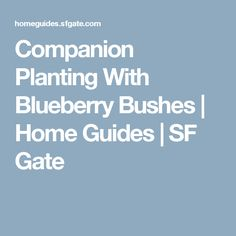Companion Planting With Blueberry Bushes   Home Guides   SF Gate