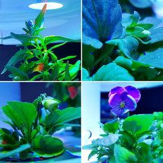 @pippipaoli Piccoli fiori sbicciano #plantui #viole #instaflower #greenporn Viole, Green, Flowers, Plants, Instagram, Italia, Plant, Royal Icing Flowers, Flower
